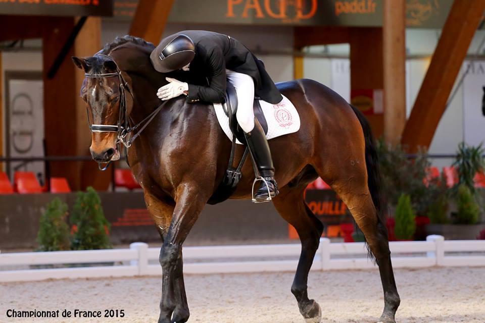 Hanovrien Champion FEI