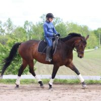 8 yr old dressage mare