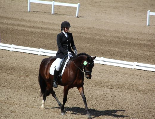 Canadian Warmblood par Rhythm and Blues